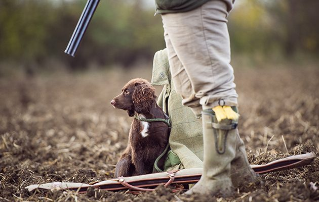 How-to-get-your-gundog-to-sit-630x400